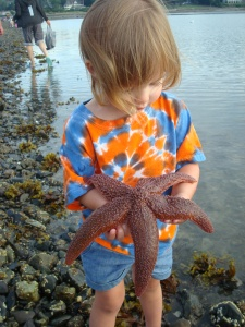 Starfish Bar Harbor, Maine